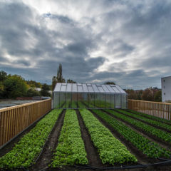 How Delhaize Urban Farm fits into their marketing strategy