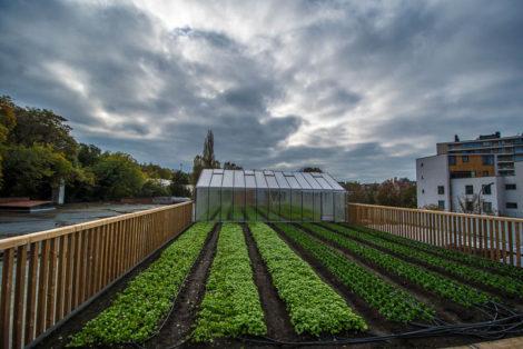 La ferme urbaine de Delhaize un jour de mauvais temps