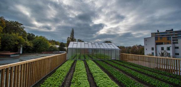 How Delhaize Urban Farm fits into their marketing strategy