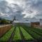 Stratégie marketing : quel rôle pour la ferme urbaine de Delhaize