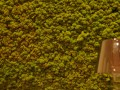 dominique rigo poltrona frau baccarat brussels bruxelles sablon etude de marche marktonderzoek market research-14