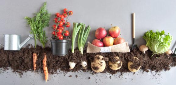 [Podcast] Emna Everard revolutionises the organic market with Kazidomi
