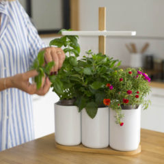 Lilo : Grow your aromatic herbs in your kitchen with 3.0 LED technology