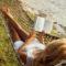 Mijn zomerlectuur: goed, uitstekend en minder goed